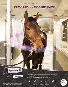 Confidence Equine Trailer